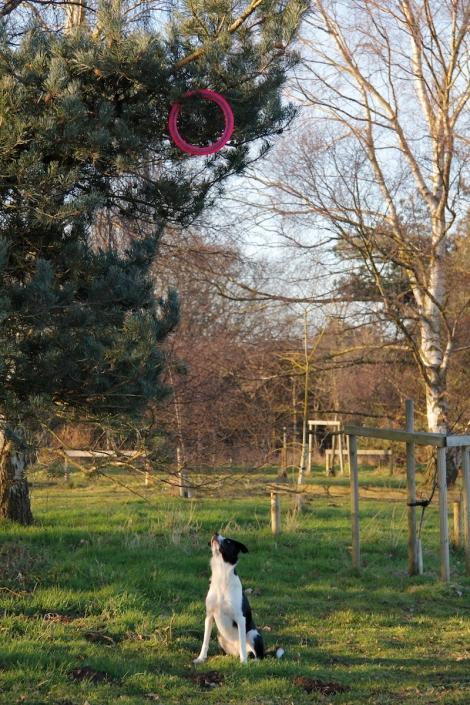 Frisbee in tree