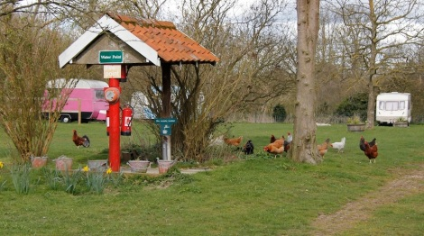 Hens and waterpoint