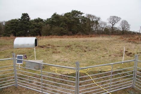 pig field