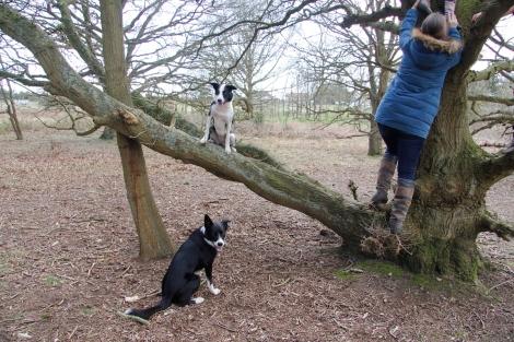 Daisy in a tree