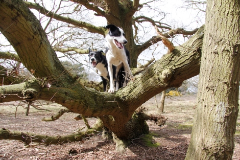 dogs in trees