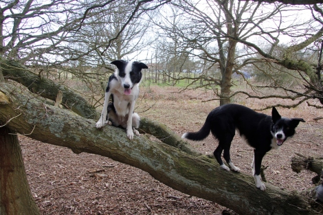 dogs in trees2