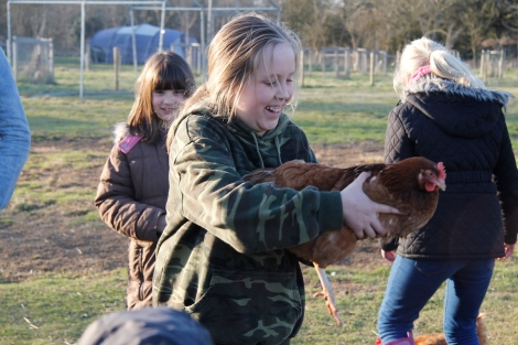 Holding chickens2