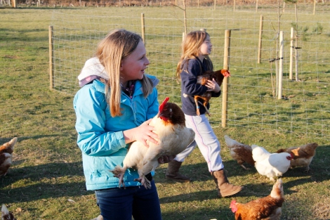 Holding chickens3