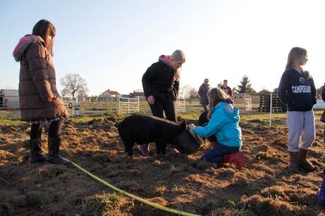 kids feeding pigs