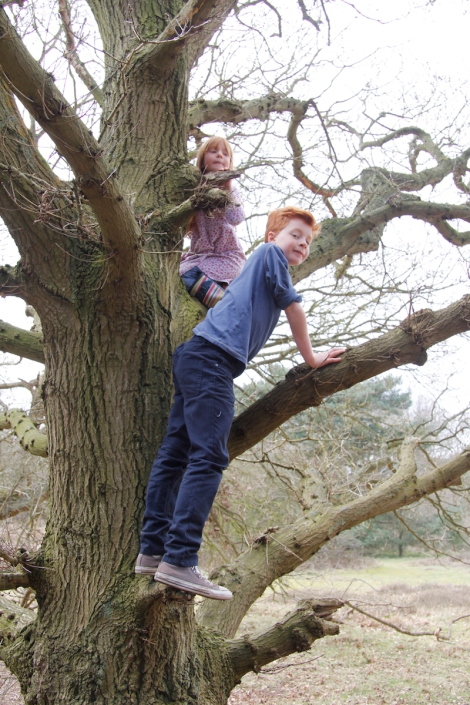 up the tree