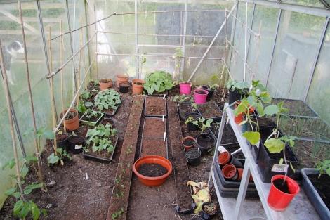 cucumber greenhouse