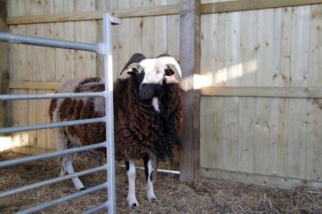 ewe visiting