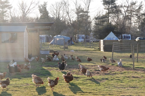 hens and campsite