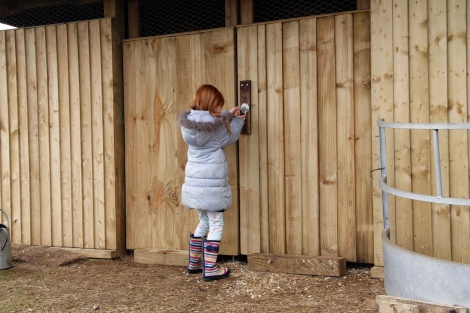 holly opening hen house