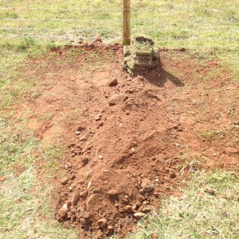 Daisy's Grave