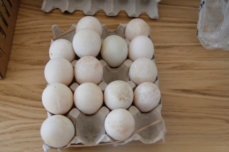 Pekin Duck eggs