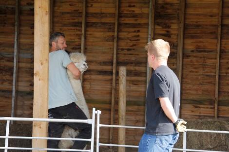 CAtching an alpaca
