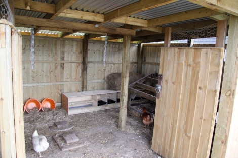 chicken palace with new nest boxes