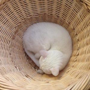 Twinkle in basket