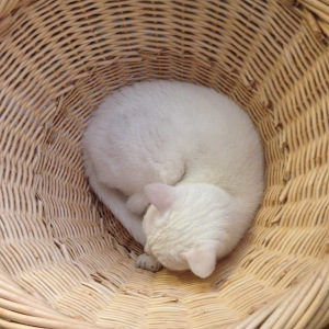 Twinkle in basket