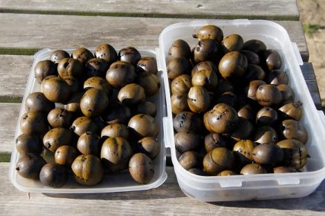 sundrying walnuts