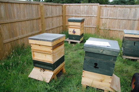 top and tailed hives