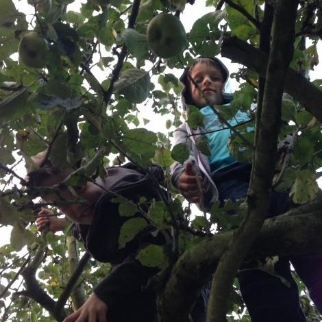 kids in trees4
