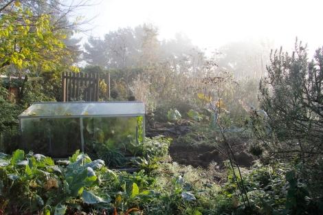 misty garden2