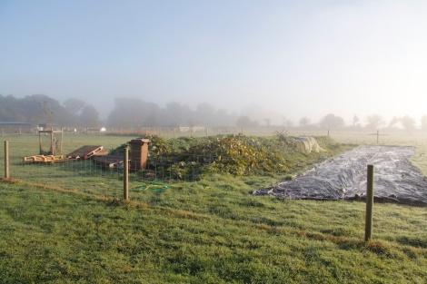misty hugelkultur