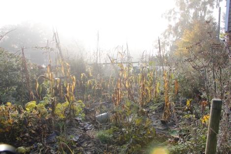 misty meso-american garden