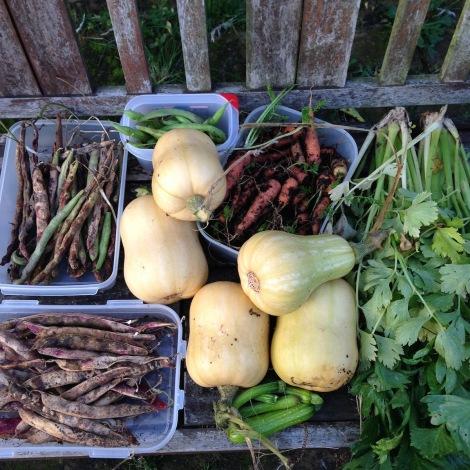 squash and veggies