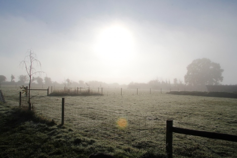 sun over sheep fields