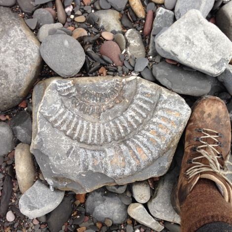 fossil and foot