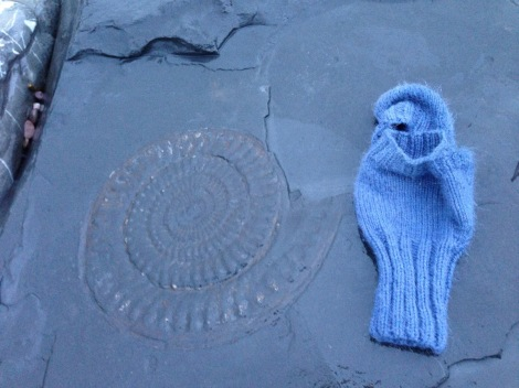 fossil and mitten