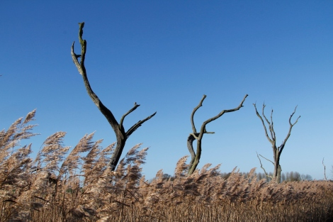 trees and reeds