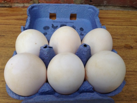 Pekin eggs