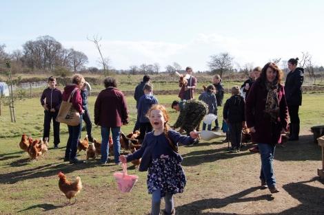 feeding hens2.JPG