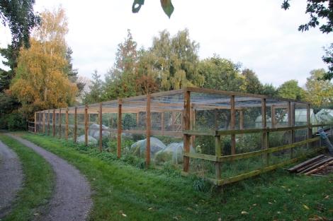 fruit-cage.jpg