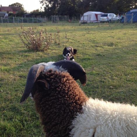 sheepwork.jpg