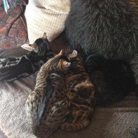 four cats.jpg