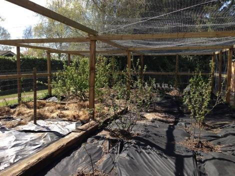 fruit cage - west side.jpg