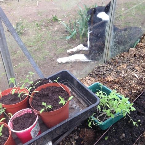 transplanting seedlings.jpg