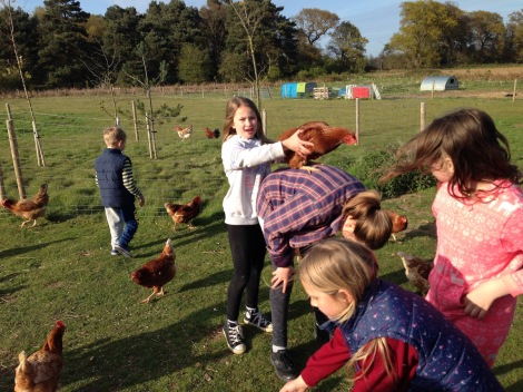 chickens on back