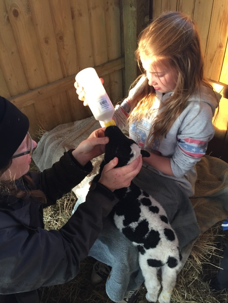 Katie feeding Ziggy