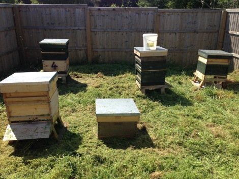 cleaned up apiary.jpg