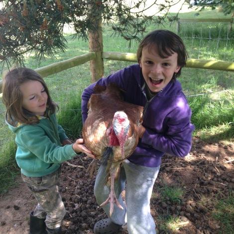 wrangling turkeys.jpg