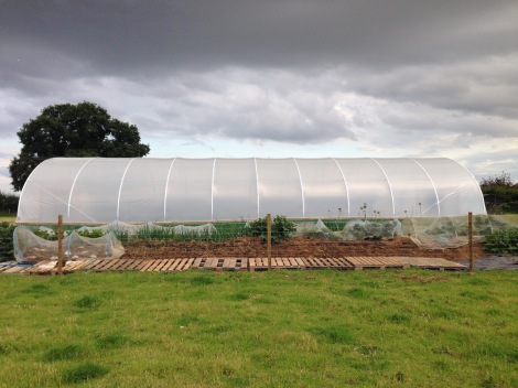 HK and polytunnel.jpg