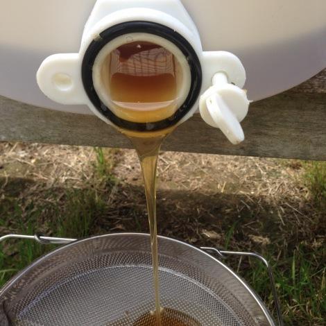 honey flow.jpg