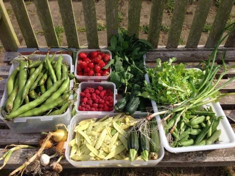 harvest3.jpg