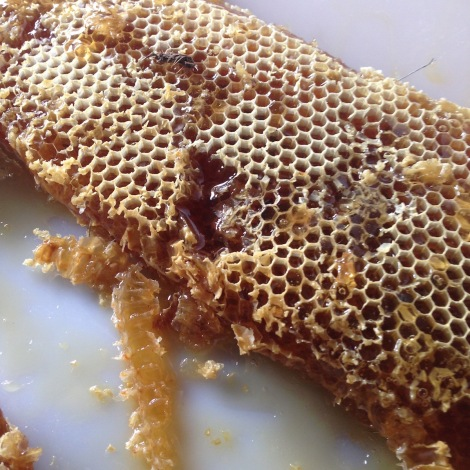 heather honey comb.jpg