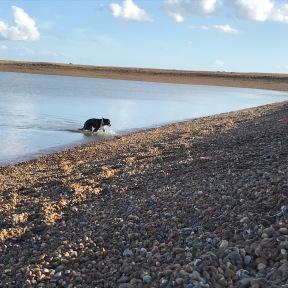 water-adn-dog
