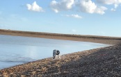 water-and-dog2