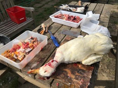 butchering-ducks