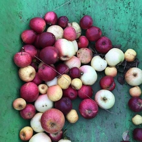 cidre apples.jpg
